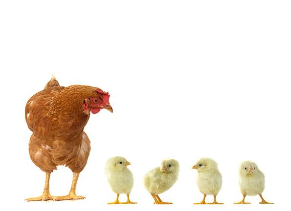 prodotti avicoltura